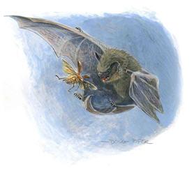 Bats Wildlife Note