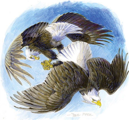 Eagle & Ospray Illustration 1