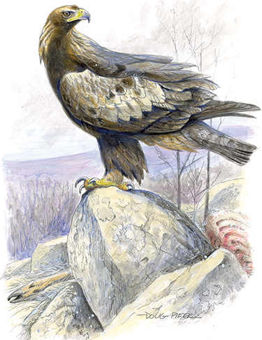 For A Map Showing The 15 Minute And 30 Second We Are Collecting From Three Of Our Telemetered Golden Eagles