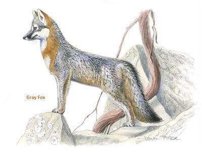 Mature crazy foxes