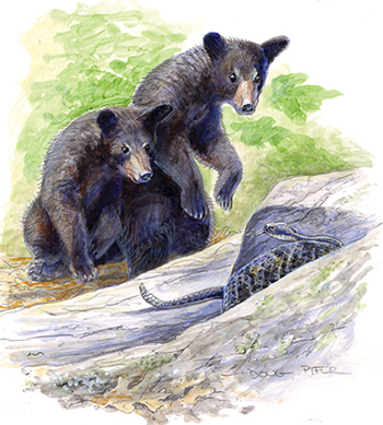 Two Black Bears illustration