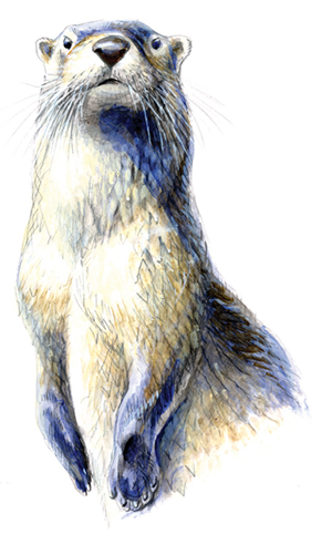 River Otter illustration 1