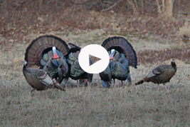 Turkey calling with Matt Morrett