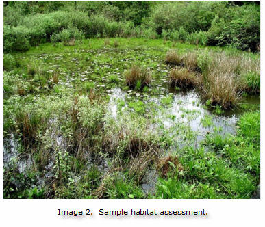 sample habitat assessement