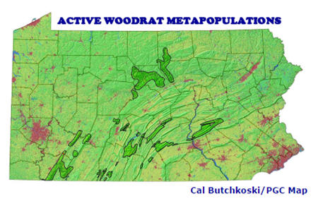 Allegheny Woodrat Metapopulations