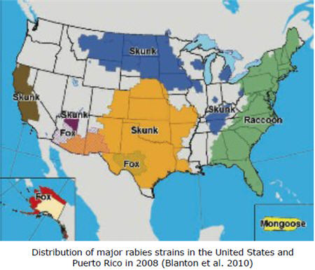 Distribution of major rabies stains