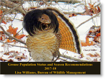 Ruffed Grouse Status Update