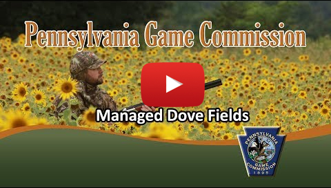 Managed Dove Fields