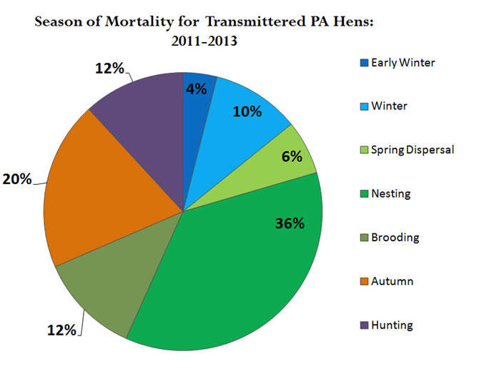 season of mortality for transmittered PA hens 2011-2013 graph