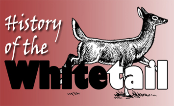 History of the Whitetail