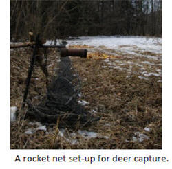 Deer Research in Southeastern PA